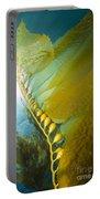 Giant Kelp, Catalina Island, California Portable Battery Charger
