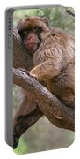 Gibraltar Barbary Macaque Portable Battery Charger