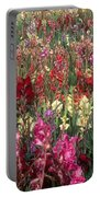 Gladioli Garden In Early Fall Portable Battery Charger