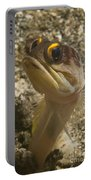 Gold-speck Jawfish Pouting, North Portable Battery Charger