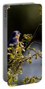 Good Morning Sunshine - Eastern Bluebird Portable Battery Charger