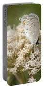 Gray Hairstreak Butterfly On Milkweed Wildflowers Portable Battery Charger