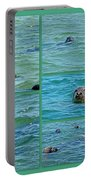 Gray Seals At Chatham - Cape Cod Portable Battery Charger