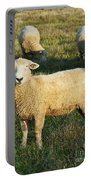 Grazing Sheep. Portable Battery Charger
