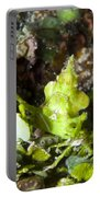 Green Arrowhead Crab, Papua New Guinea Portable Battery Charger