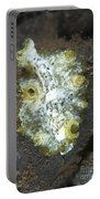Green, White And Brown Flatworm, Bali Portable Battery Charger