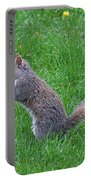 Grey Squirrel In The Rain Portable Battery Charger