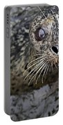 Harbor Seal Portable Battery Charger
