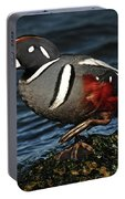 Harlequin Duck Portable Battery Charger