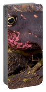 Harlequin Frog Portable Battery Charger