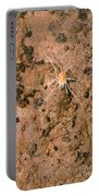 Harvestman Crosbyella Sp. In Cave Portable Battery Charger