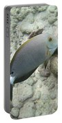 Hawaiian Tropical Fish P1060093 Portable Battery Charger