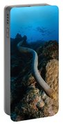 Highly Venomous Olive Sea Snake Portable Battery Charger