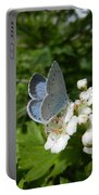 Holly Blue Portable Battery Charger