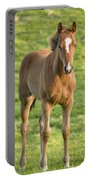 Horses In Field Near Ballyvaloo Portable Battery Charger