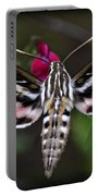 Hummingbird Moth - White-lined Sphinx Moth Portable Battery Charger