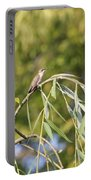 Hummingbird Resting In The Willow Portable Battery Charger