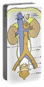 Illustration Of Female Urinary System Portable Battery Charger