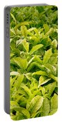 Indian Variety Of Tea Portable Battery Charger