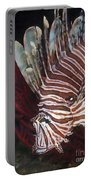 Indonesian Lionfish On A Wreck Site Portable Battery Charger
