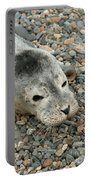 Injured Harbor Seal Portable Battery Charger by Ted Kinsman