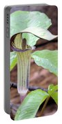 Jack-in-the-pulpit Portable Battery Charger