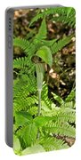 Jack-in The-pulpit_4588 Portable Battery Charger