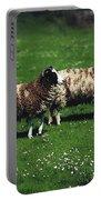 Jacob Sheep Portable Battery Charger