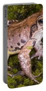 Japanese Ranid Frog Portable Battery Charger