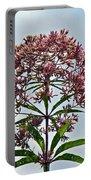 Joe-pye Weed Wildflower - Eupatorium Portable Battery Charger