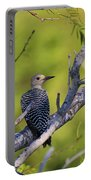 Juvenile Golden-fronted Woodpecker Portable Battery Charger
