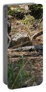 Juvenile Nile Crocodile Portable Battery Charger