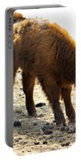 Juvenile Scottish Highlander Cattle Portable Battery Charger