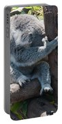 Koala Portable Battery Charger by Carol Ailles
