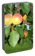 Lake Country Apricots Portable Battery Charger
