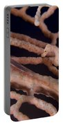 Large Whip Goby And Pygmy Seahorse Portable Battery Charger