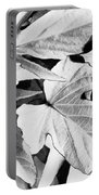 Leaf Study In Black And White Portable Battery Charger
