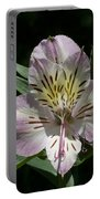 Lily - Liliaceae Portable Battery Charger