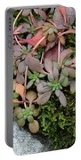Lime Stonecrop  Leaves In Winter Portable Battery Charger