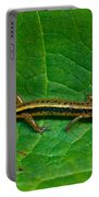 Lined Salamander 3 Portable Battery Charger