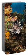 Lionfish, Fiji Portable Battery Charger