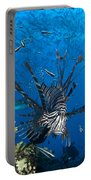 Lionfish Foraging Amongst Corals Portable Battery Charger