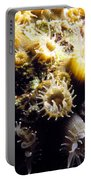 Live Coral Feeding At Night Portable Battery Charger