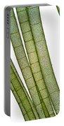 Lm Of Tubular Algae Portable Battery Charger
