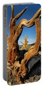 Looking Through A Bristlecone Pine Portable Battery Charger