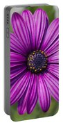 Lovely African Daisy - Osteospermum Portable Battery Charger