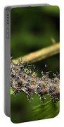 Lymantria Dispar Gypsy Moth Larva Portable Battery Charger