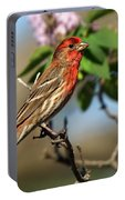 Male Finch Portable Battery Charger