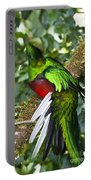 Male Resplendent Quetzal Portable Battery Charger