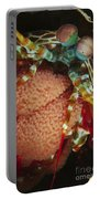 Mantis Shrimp With Egg Clutch, North Portable Battery Charger